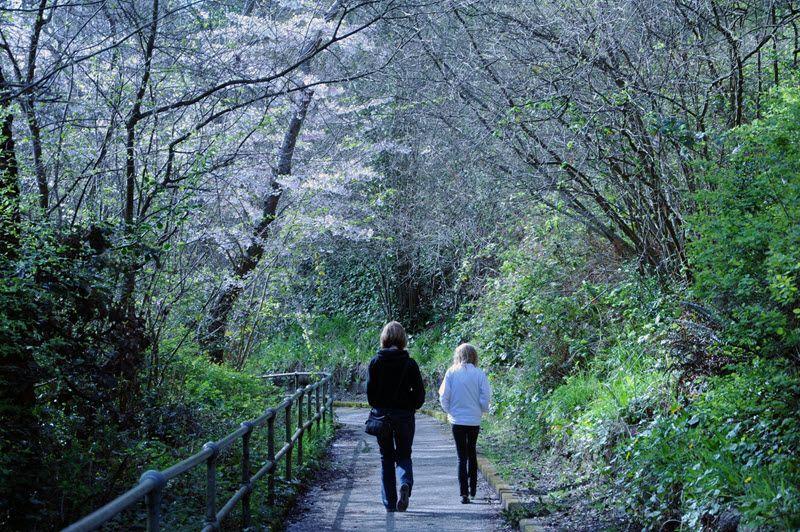 Women Walking Forest